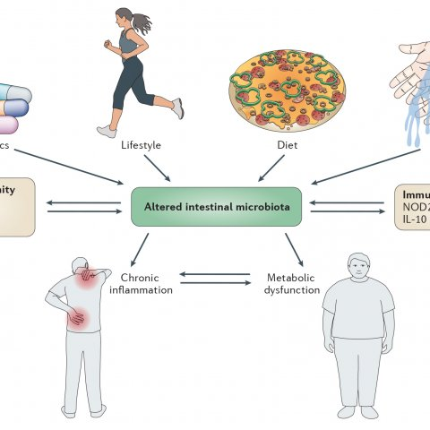 Factors shaping the microbiome and impact on host physiology (from DOI: 10.1038/nrmicro2974)