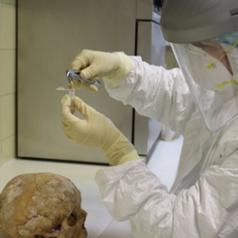 aDNA Laboratory - analysis of an ancient skull