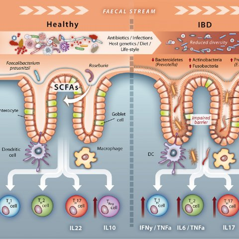 Microbial signatures of a healthy gut and IBD (from DOI: 10.1136/gutjnl-2016-313678)
