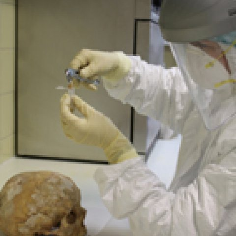Analysis of an ancient skull